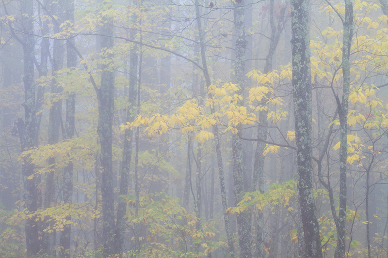 """The Sound You Made For Me"" - Foggy forest, New River Gorge, West Virginia."
