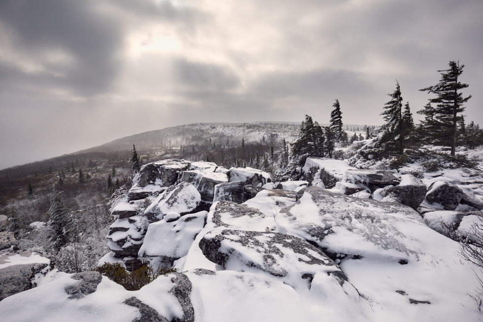 """Hard Times"" - A snow-covered Dolly Sods, West Virginia."