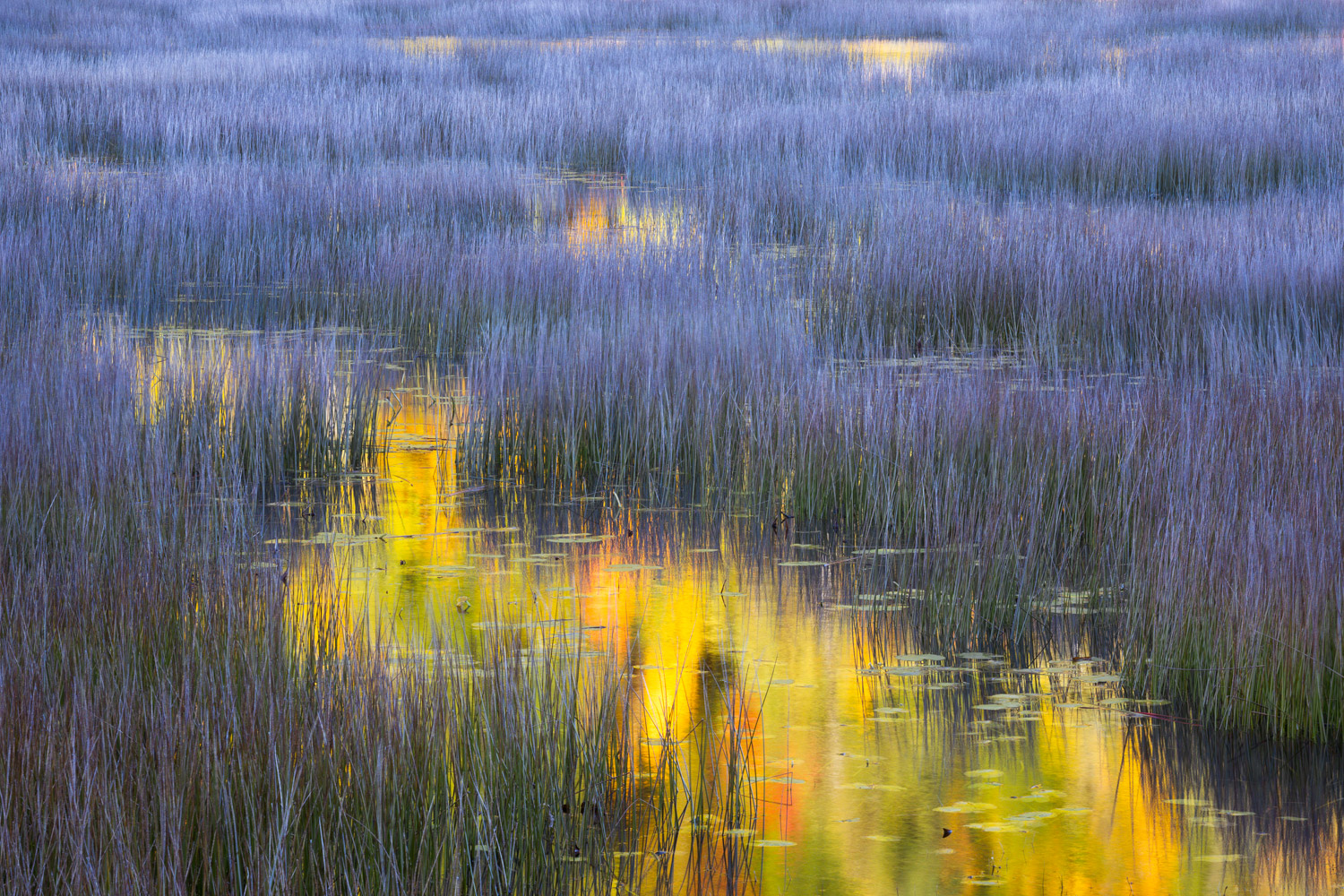 """""""In a Dream"""" - A bouquet of color reflected during a calm autumn morning at a tarn in Acadia National Park, Maine."""