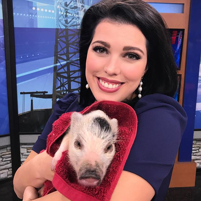 Meet Honey Boo-Boo! She brightened our day in the newsroom. This baby pig visited us on set this morning from the @pbfairandexpo The fair is still going on all weekend. Great family fun!