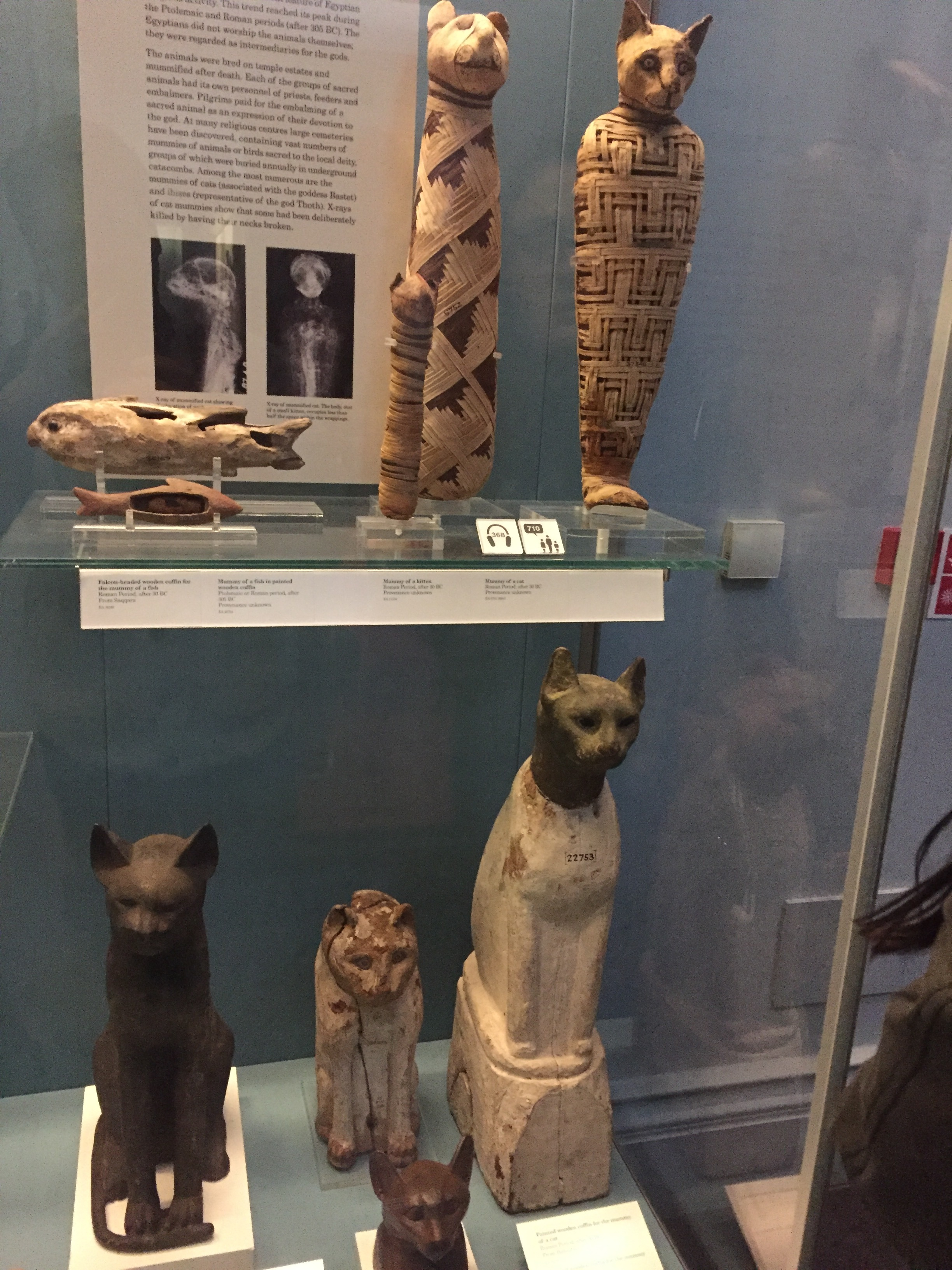 Extremely Rare Egyptian Cat Mummies