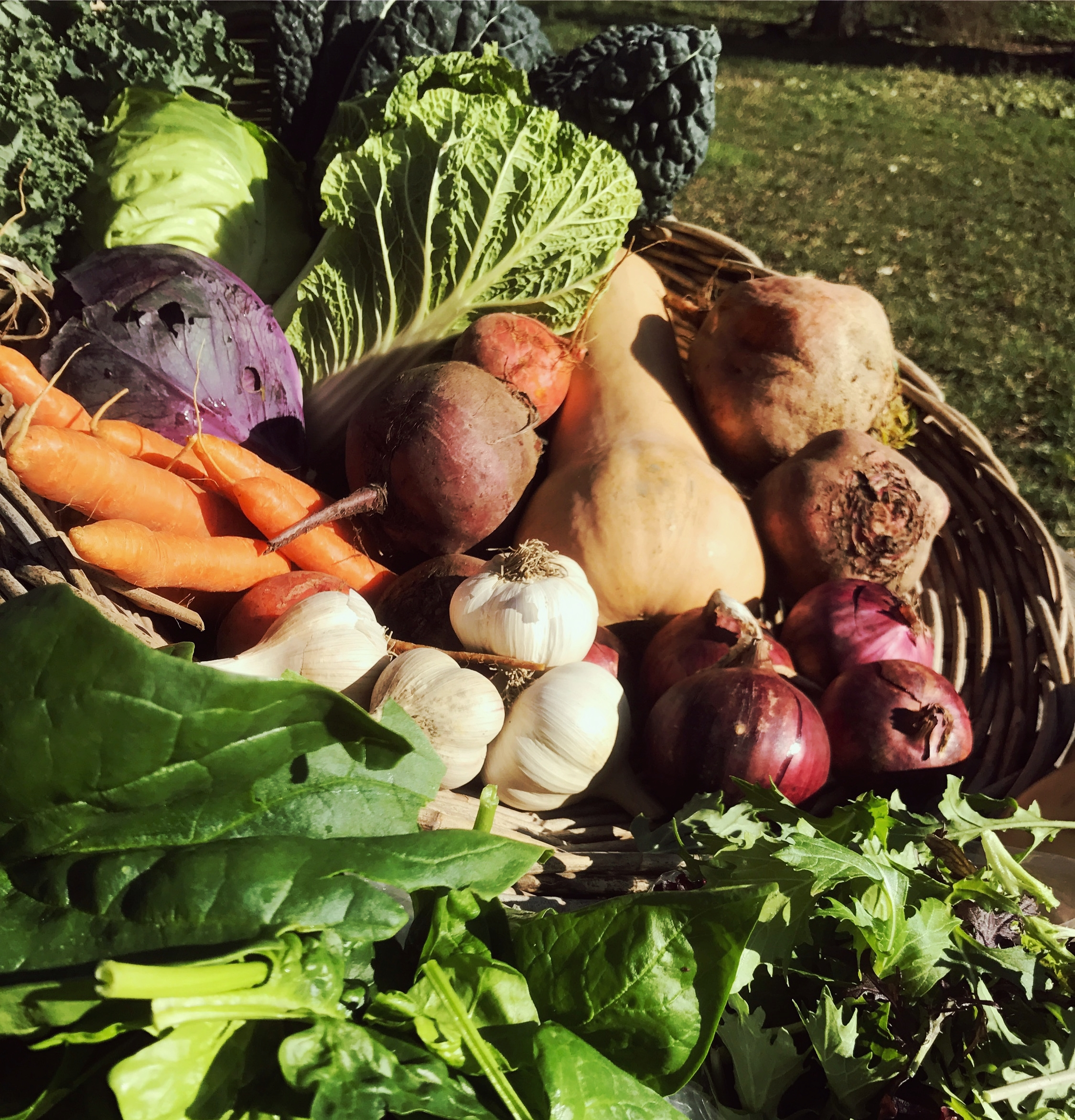 A typical fall share!  Beets, onions, squashes and more!