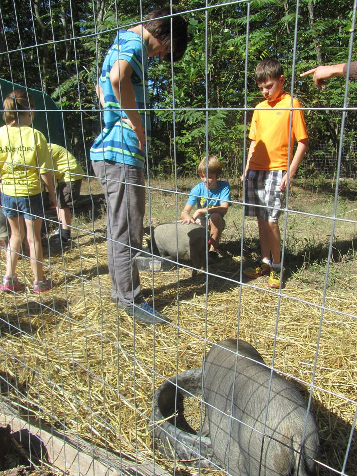 The pigs at Wild Earth meet some new friends.