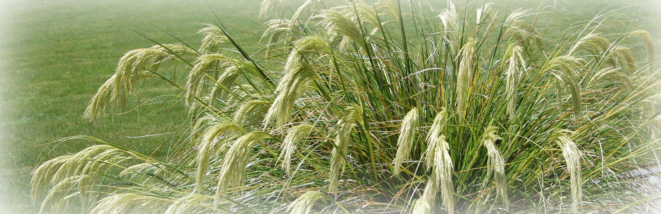NZ grass.jpg