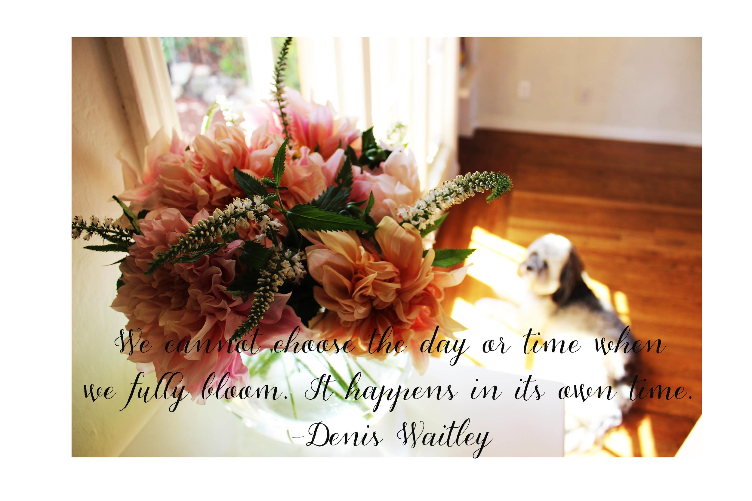 Friday Flowers Dahlias