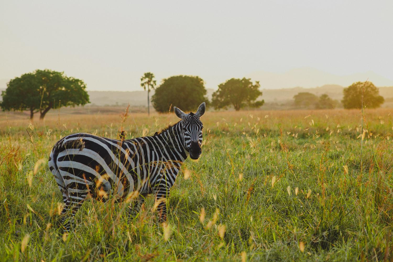 Travel_Uganda-019.jpg