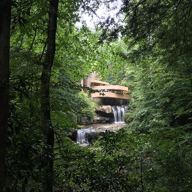 That classic Fallingwater shot 😜