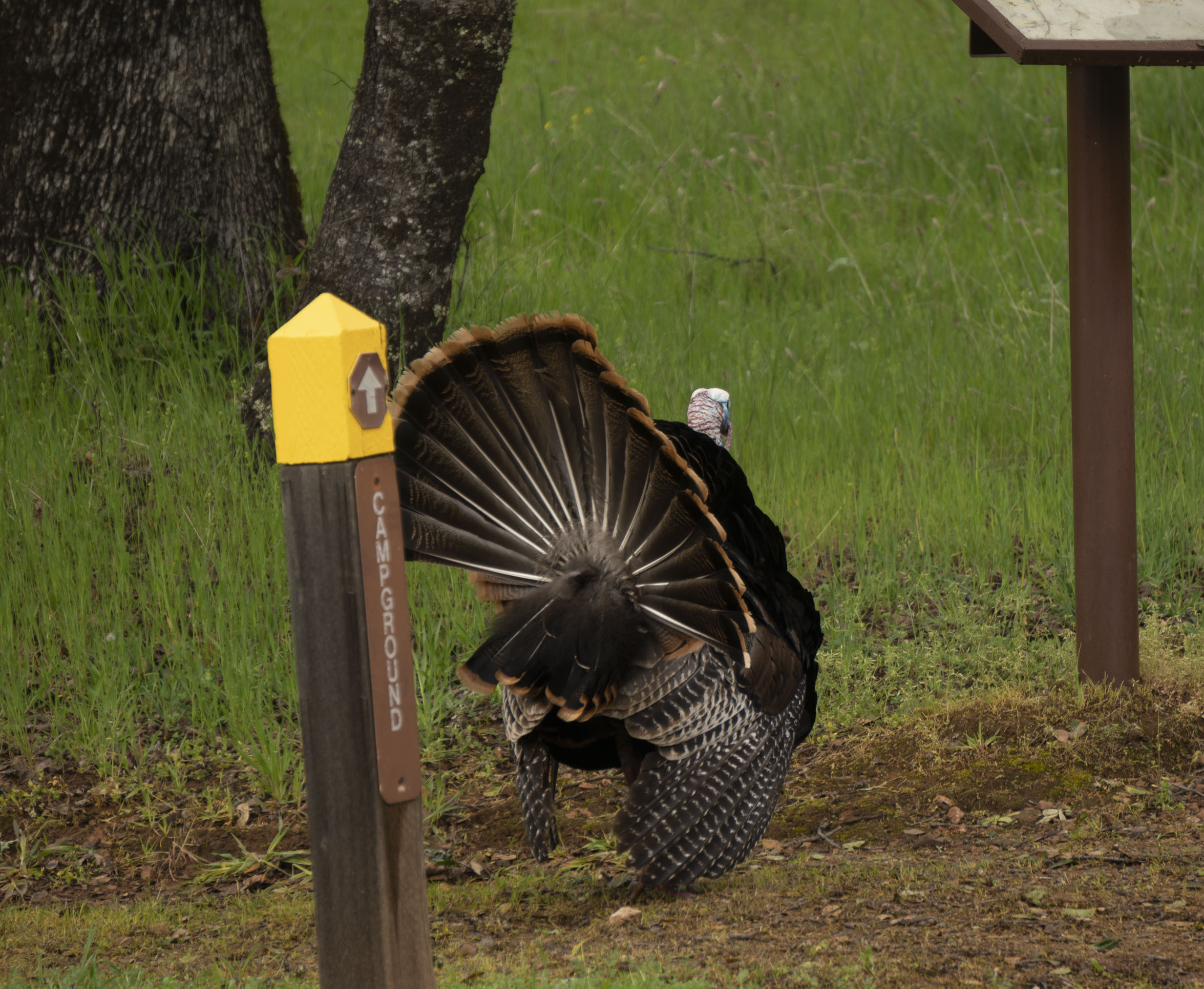 Turkey 5.jpg