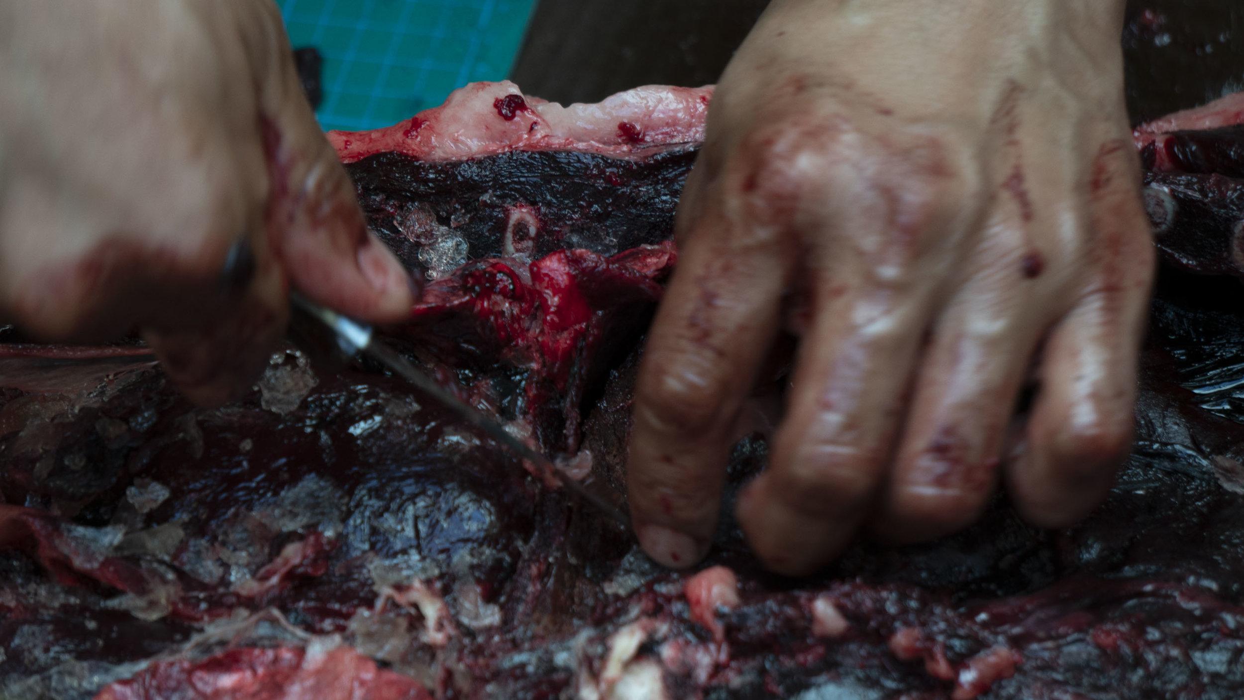 Seal Hands 7.jpg