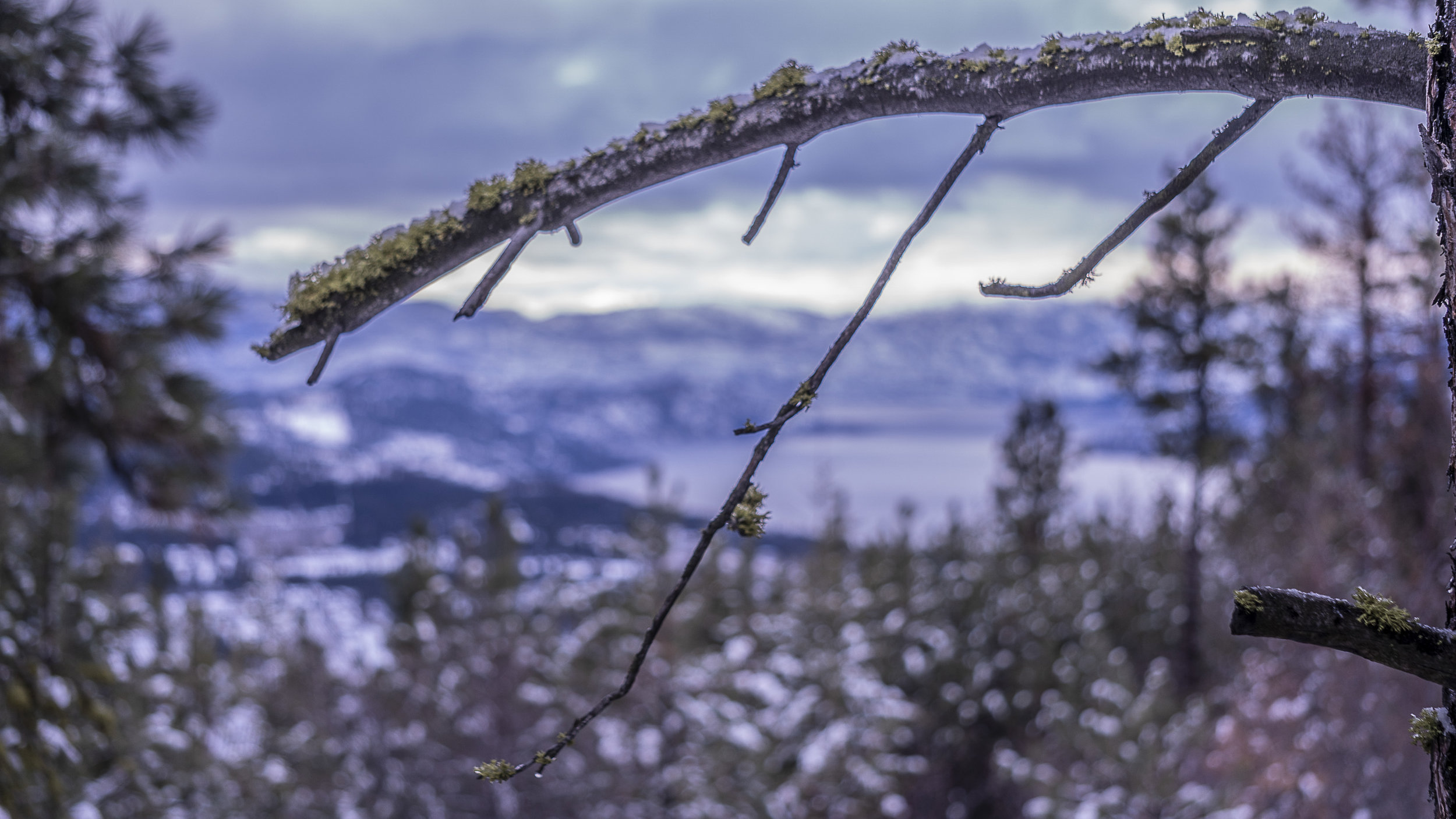 Branch View.jpg