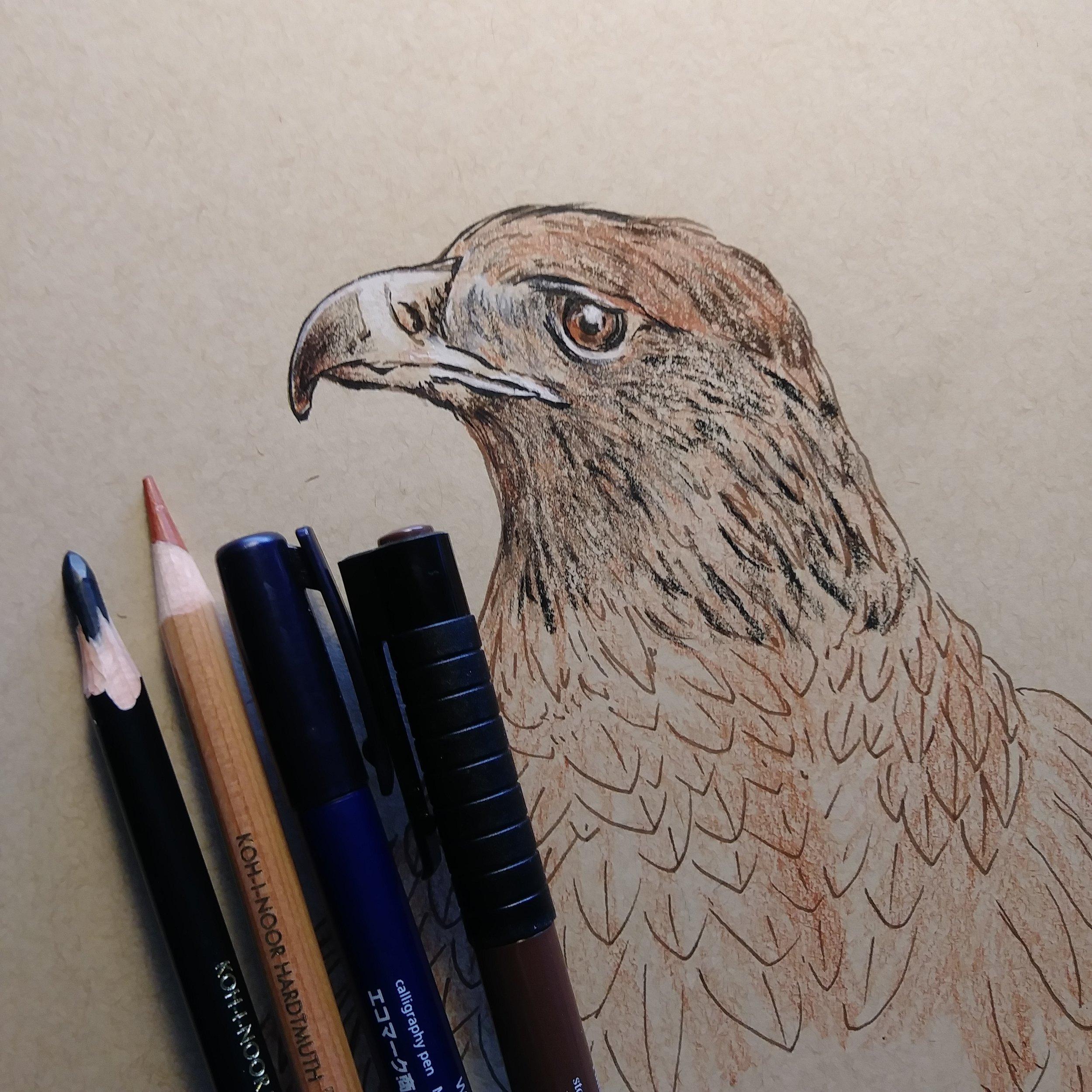 0933 golden eagle WIP elisa friesen 2018.jpg