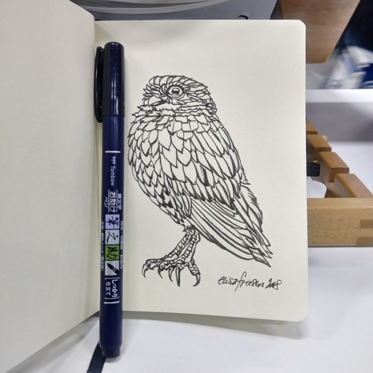 0996 burrowing owl sketch.jpg