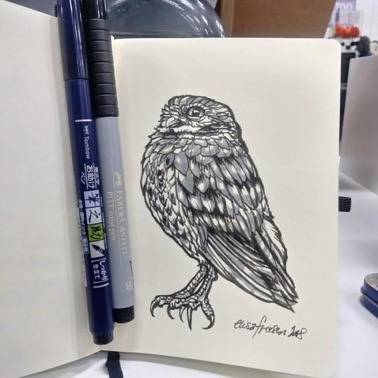 0997 Burrowing Owl Sketch.jpg