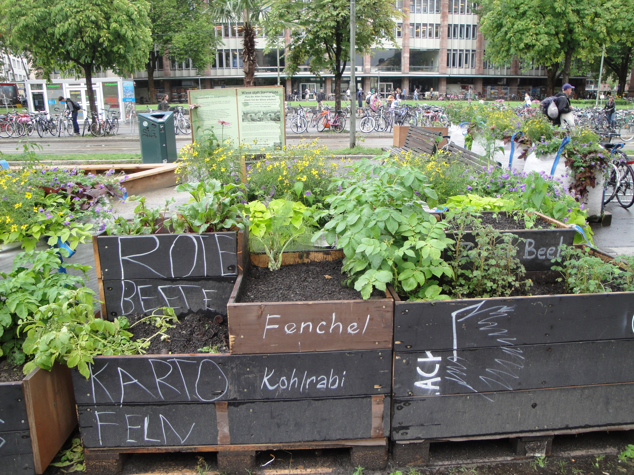 Community gardens in the city.