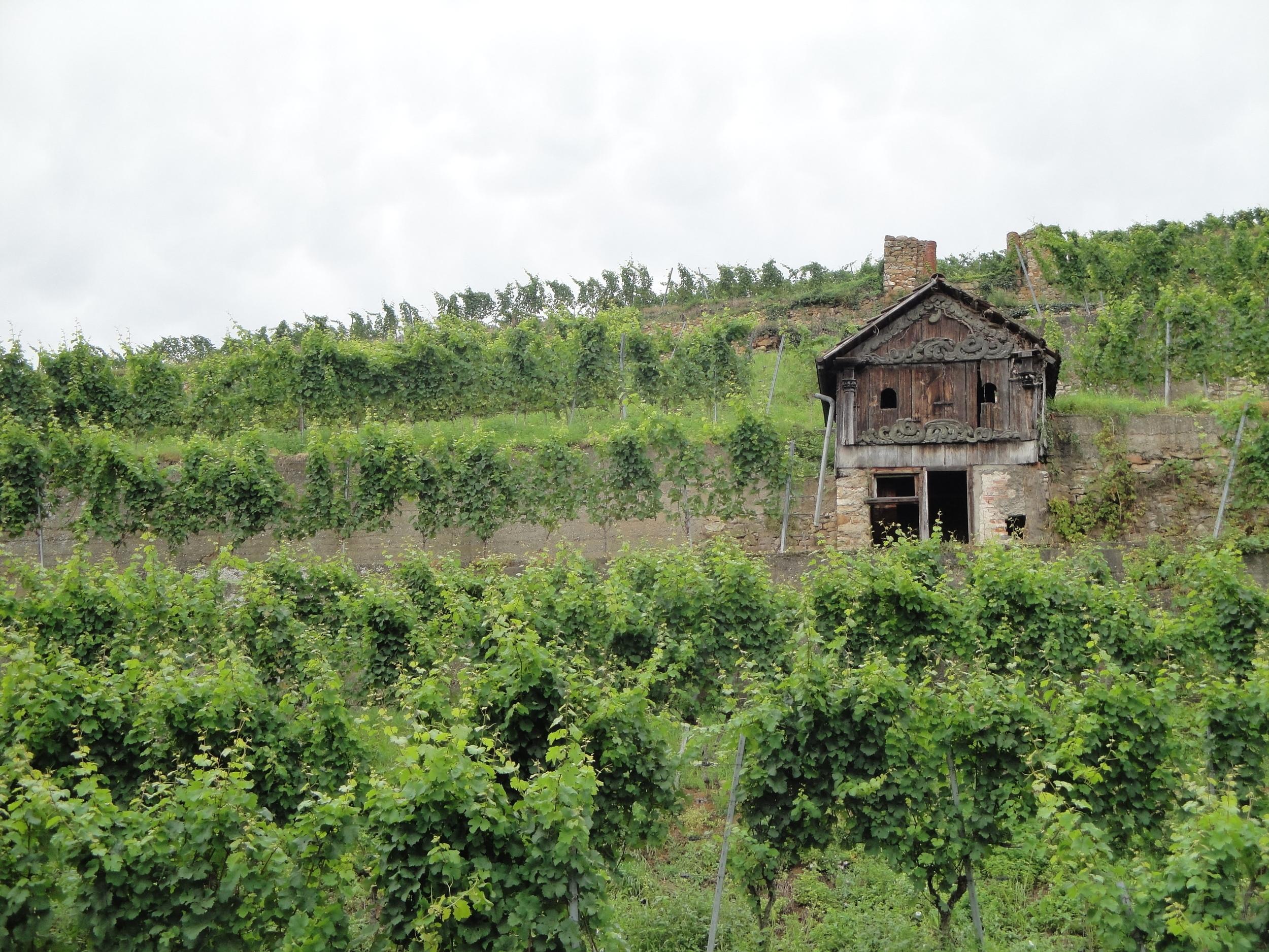 Wine at Staufen.