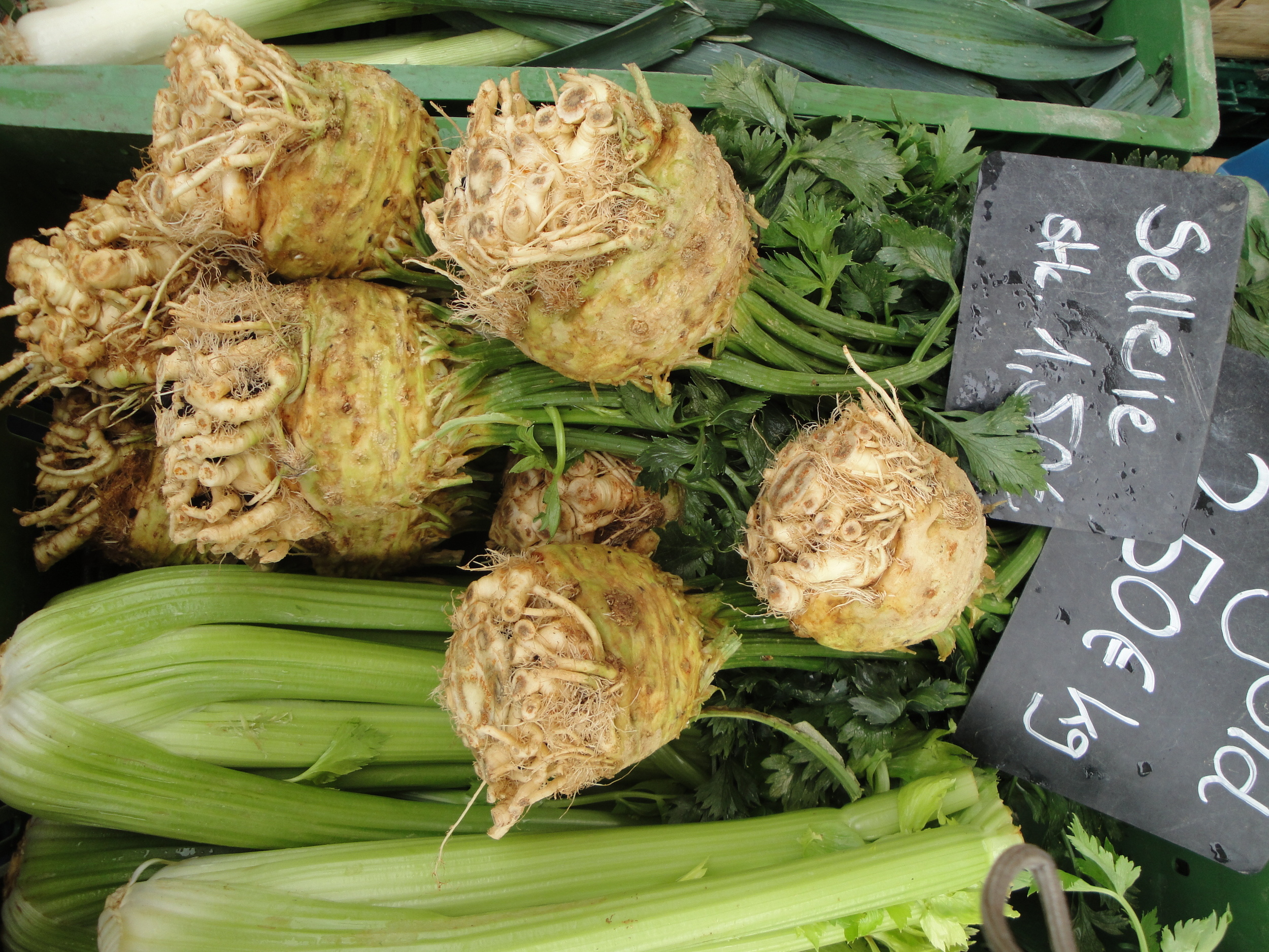 Celeriac root the right size.