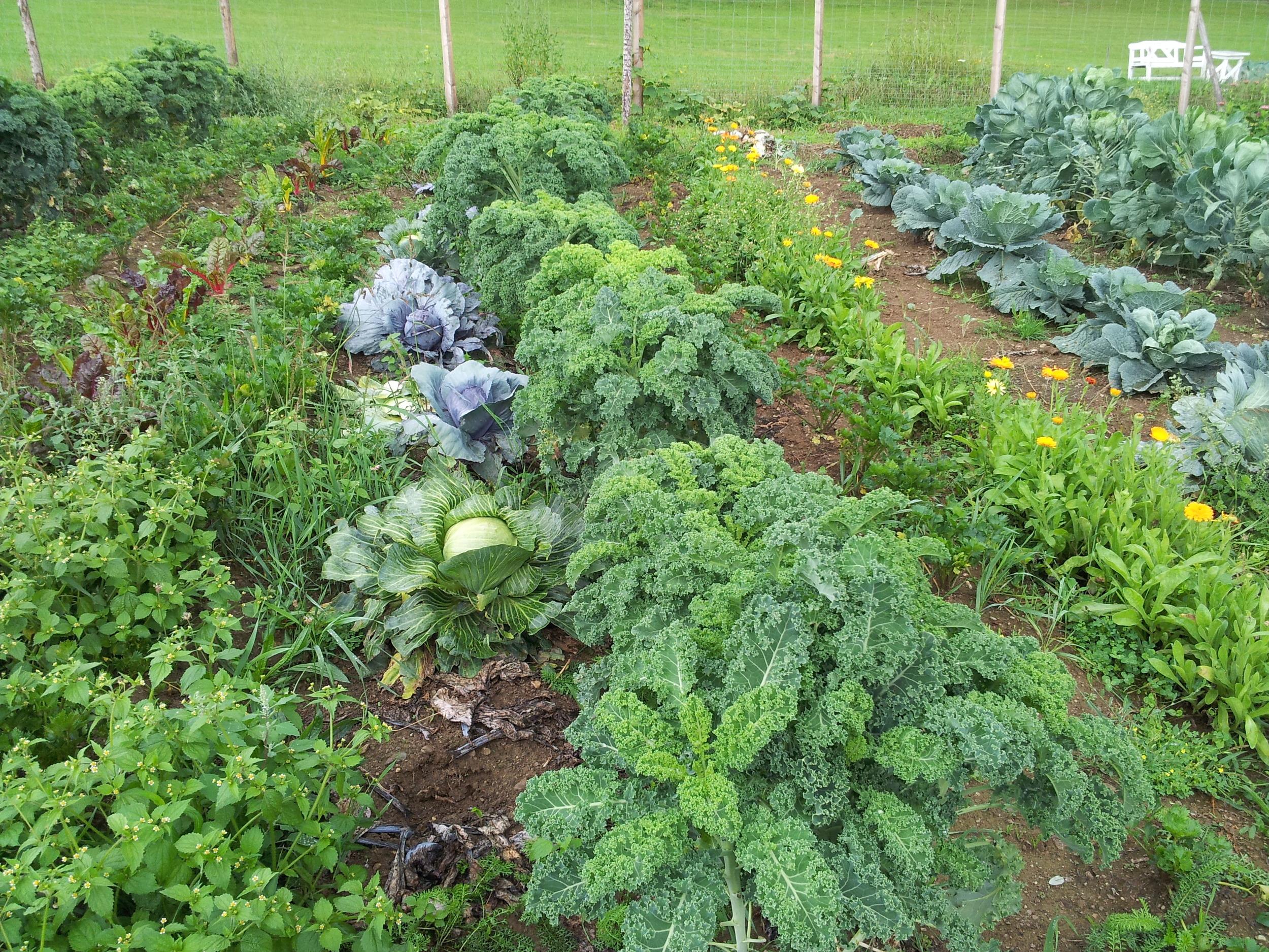 Kale kale and more kale. An Eastern-suburbians heaven.