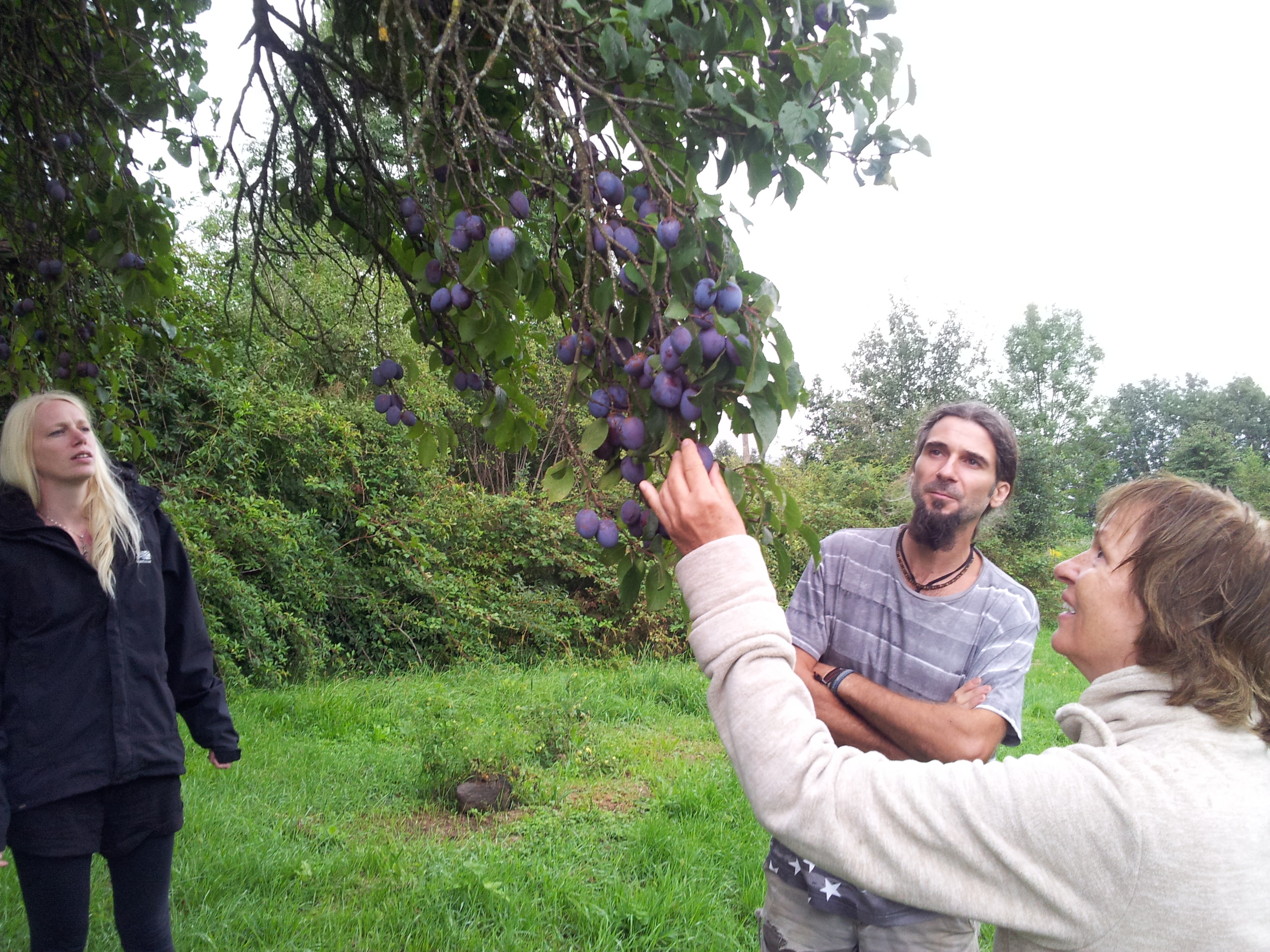 Adam and Eve...and my mum eating ripe plums off the tree