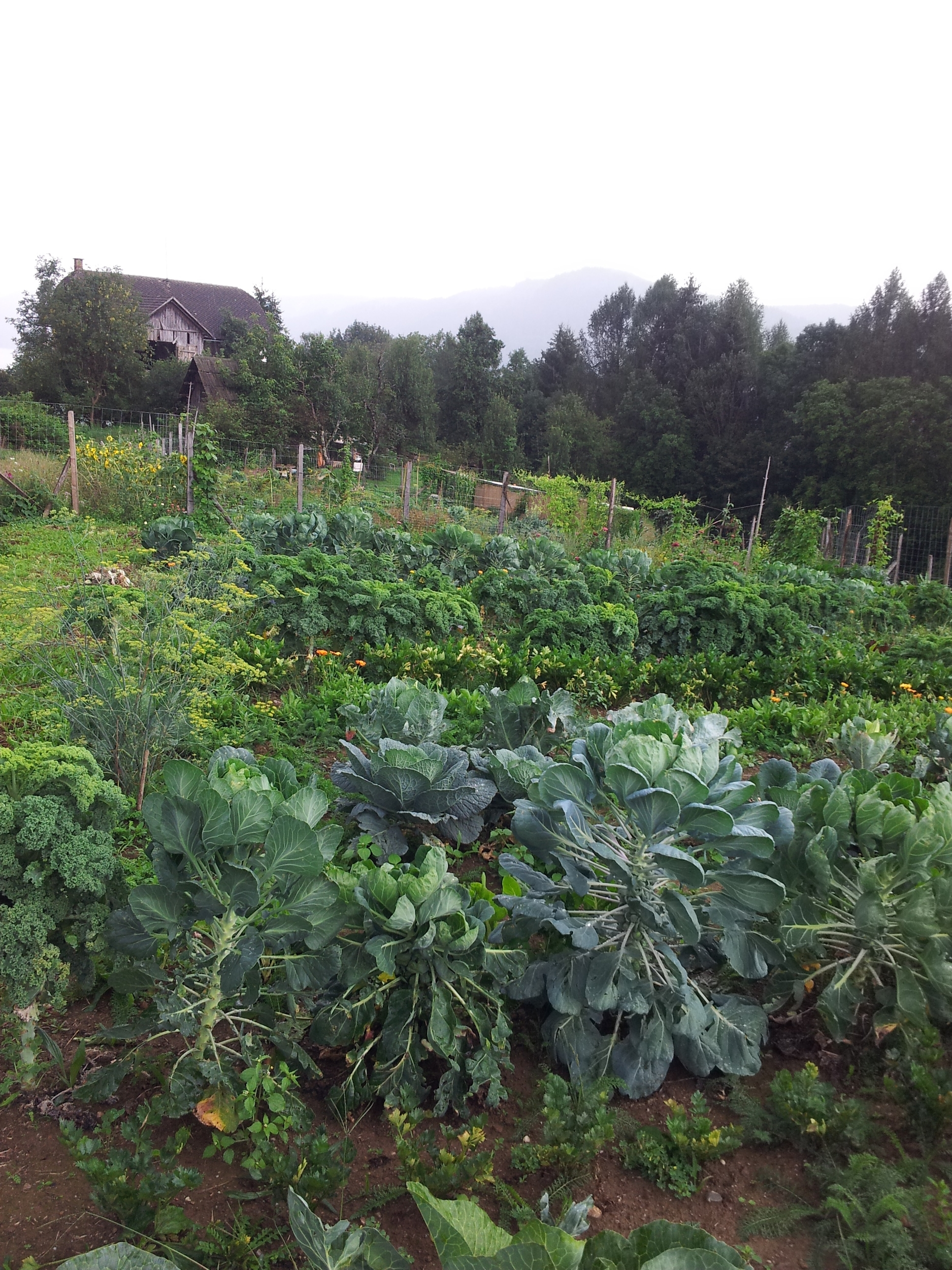 We visited a biodynamic organic vegetable farm. It was magical and luscious. Unfortunately they don't have a website.