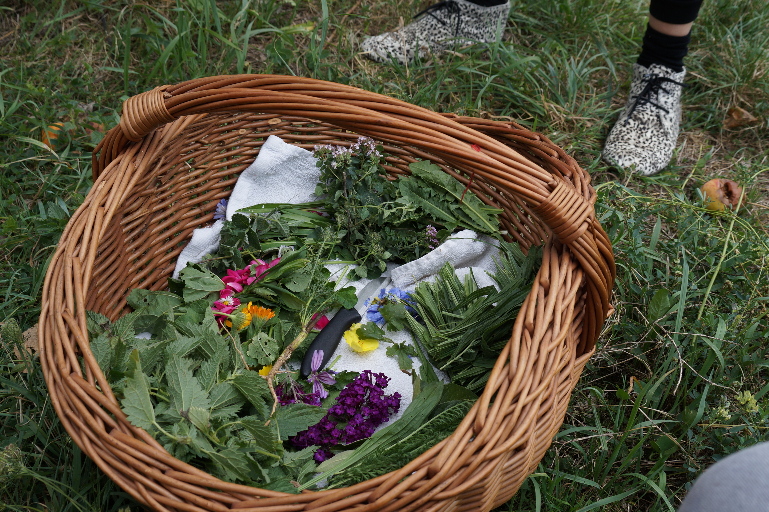 We attended a wild-herb foraging cooking class!