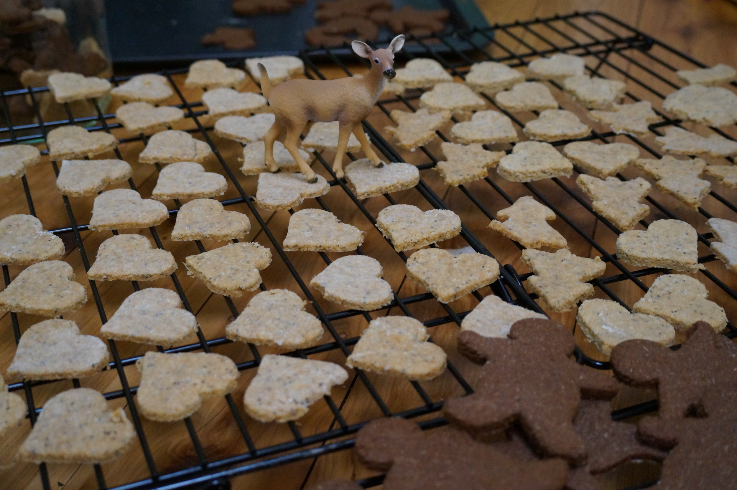 Lemon and poppy seed cookies with Bambi