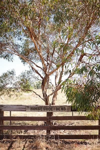 Barham_Avocados_Sarah_Anderson_Victoria_horseshoe_bend_tree_fence_countryside_farm