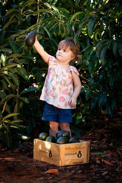 Barham_Avocados_Sarah_Anderson_Victoria_child_avo_tree_countryside