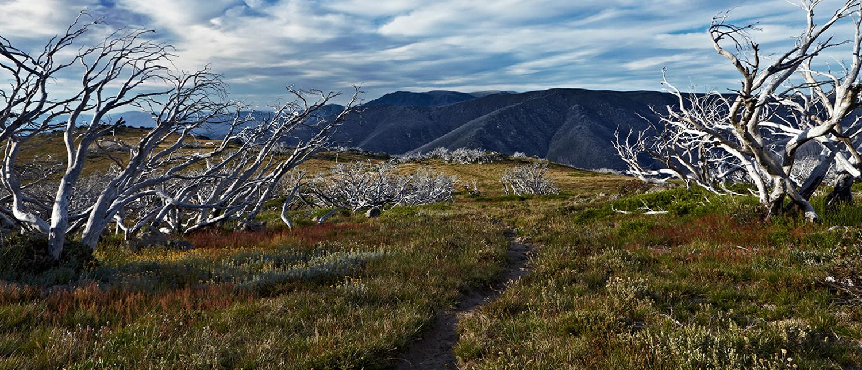 Sarah anderson photography landscape falls creek victoria australia