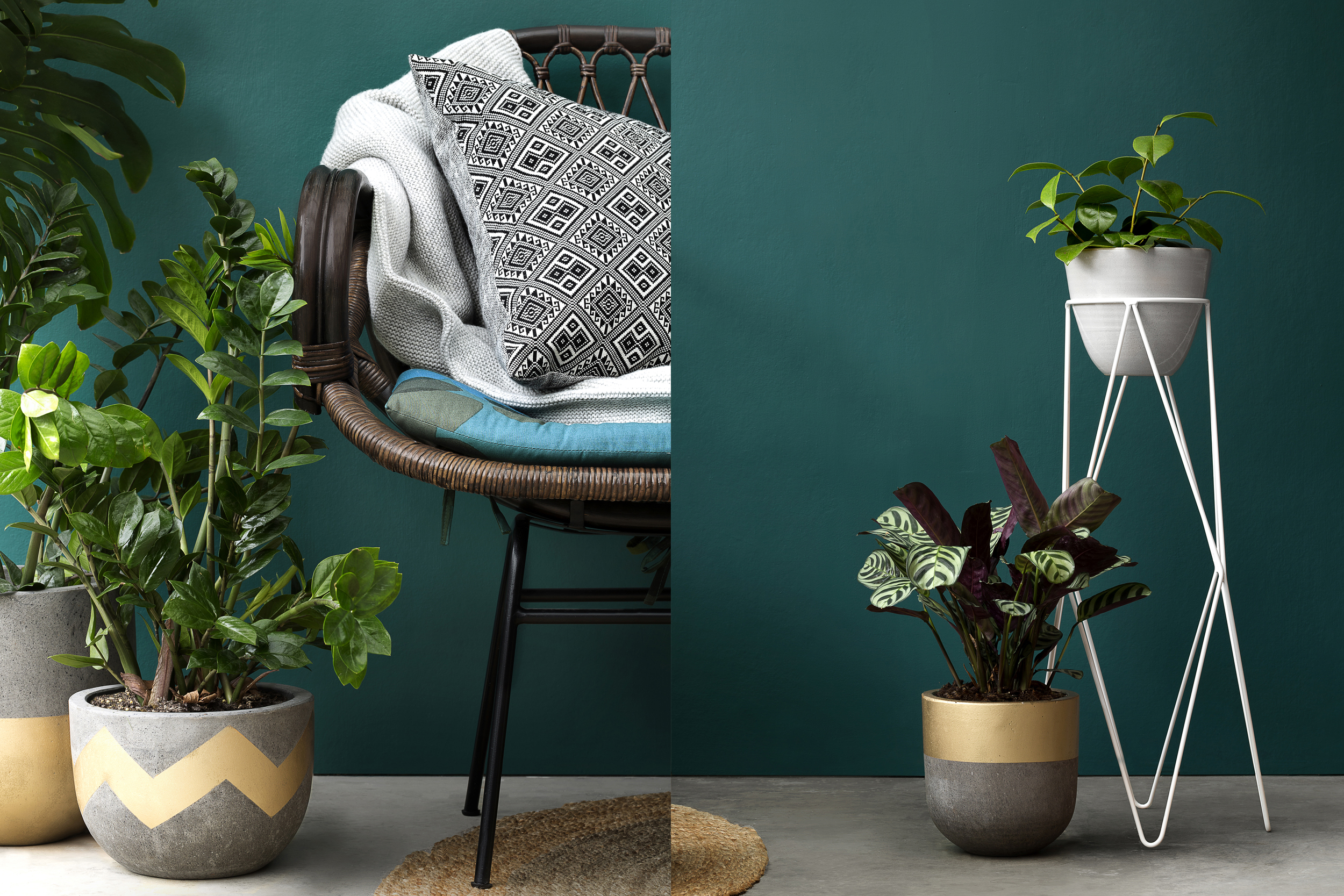 Pots from  Fenton & Fenton , Rug from   Armadillo & Co , couch from  The Family Love Tree , Mikmax throw rug from  Basic Habitat ,Cushion from the  Family Love Tree , plant stand from  Ivy Muse .
