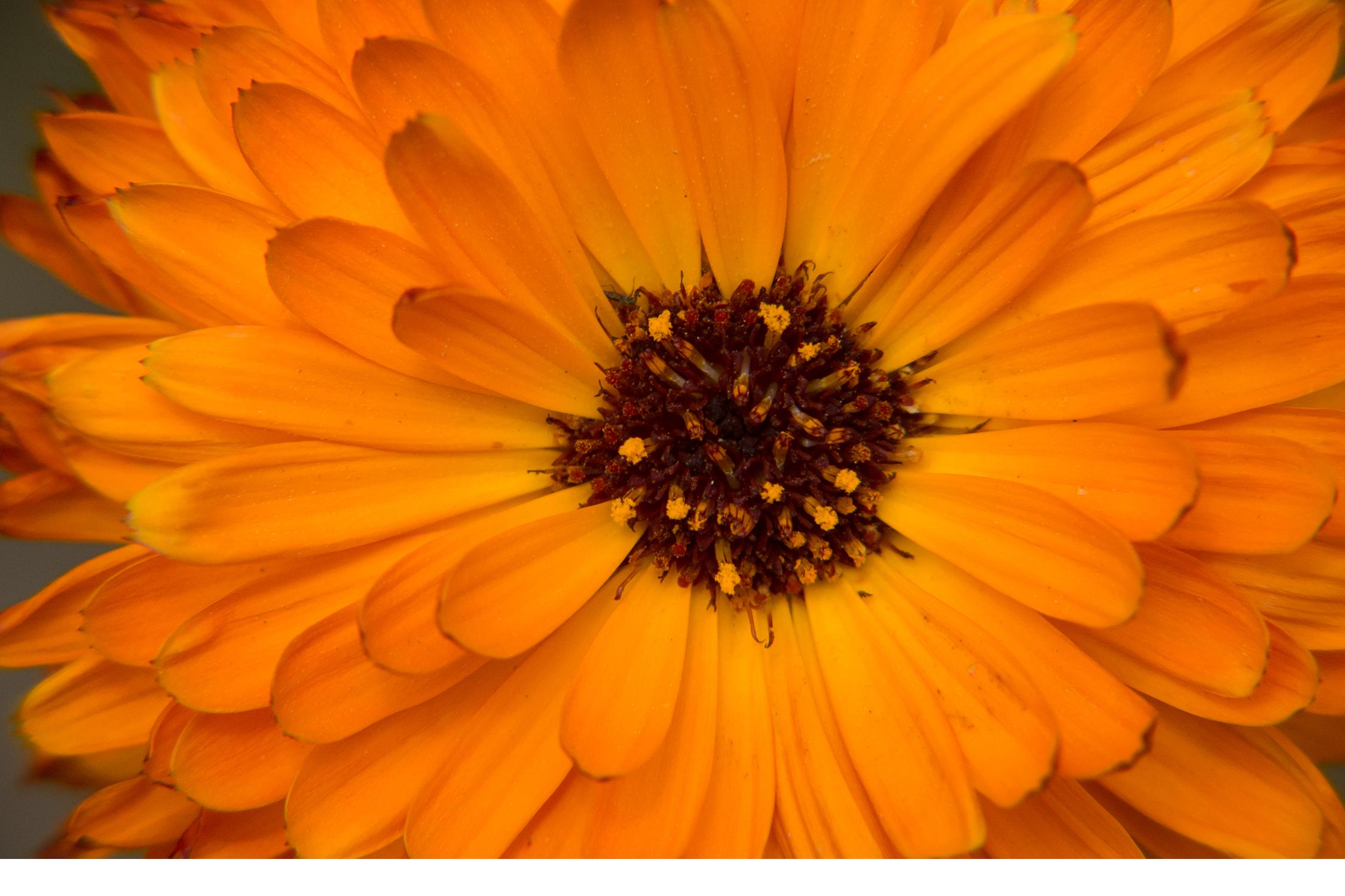 BenMiller_OrangeFlower.png