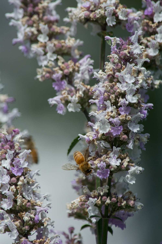 BenMiller_Bees.png