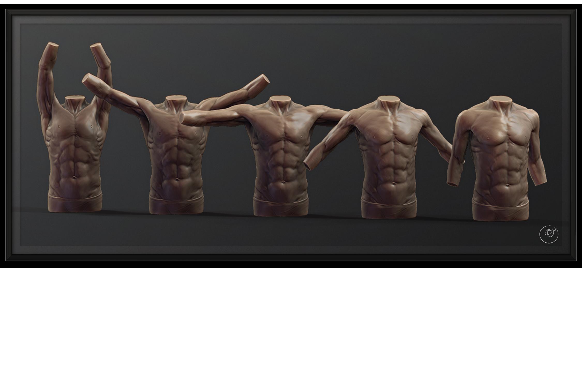 Torso Anatomy Blendshapes #1