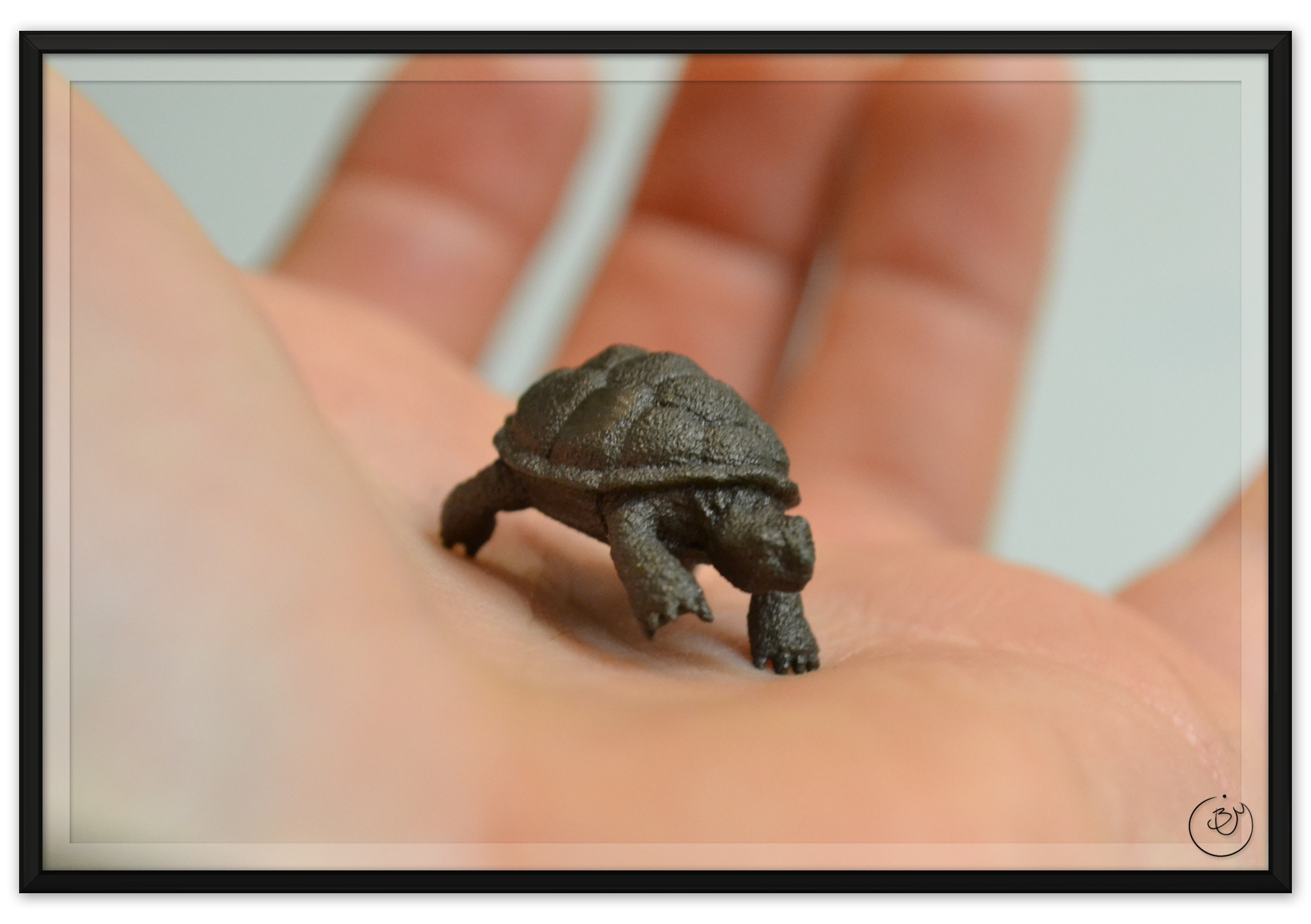 BenMiller_Turtle-Palm-1500px.png