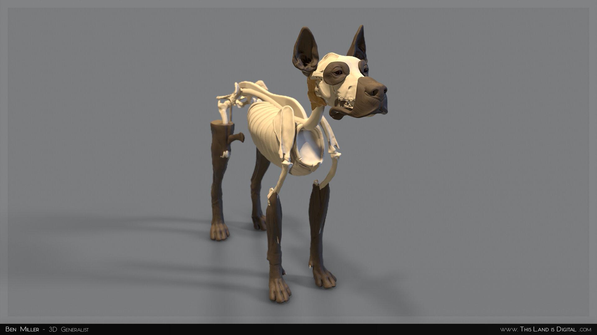 TLiD_BenMiller_AnatomyDogStudy-Skeleton_02.jpg