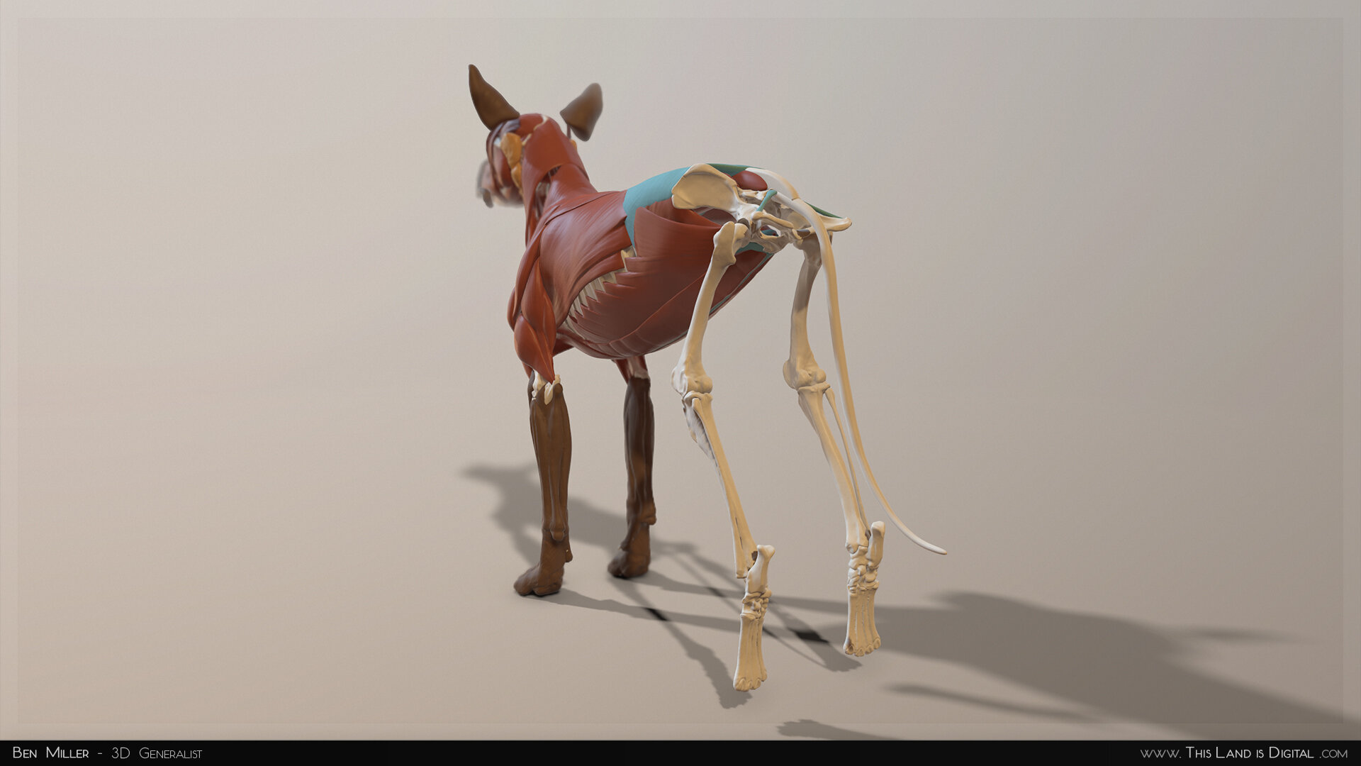 TLiD_BenMiller_AnatomyDogStudy-Split_02.jpg