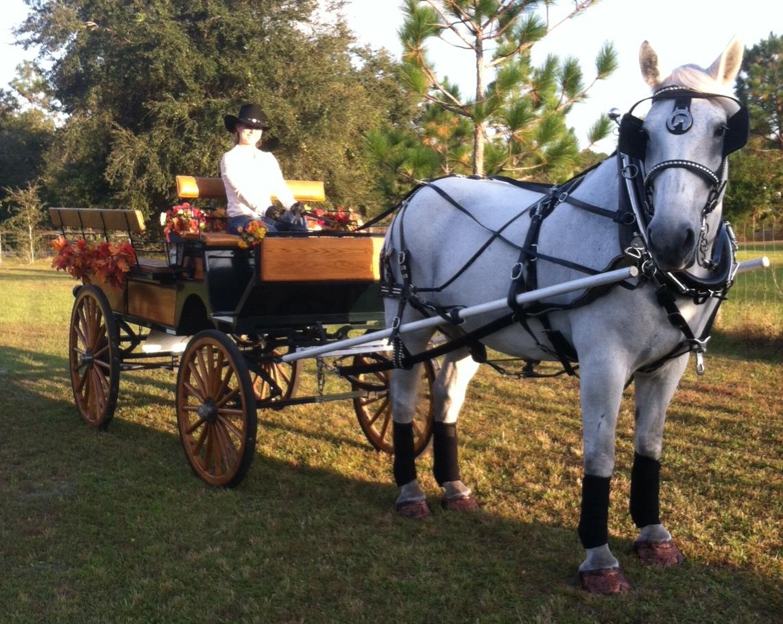 Holiday Wagon Rides