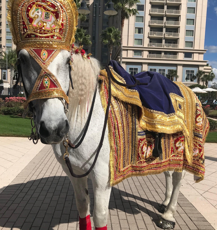 Baraat Horse
