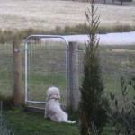 Marley-longing-to-be-let-free-150x150.jpg