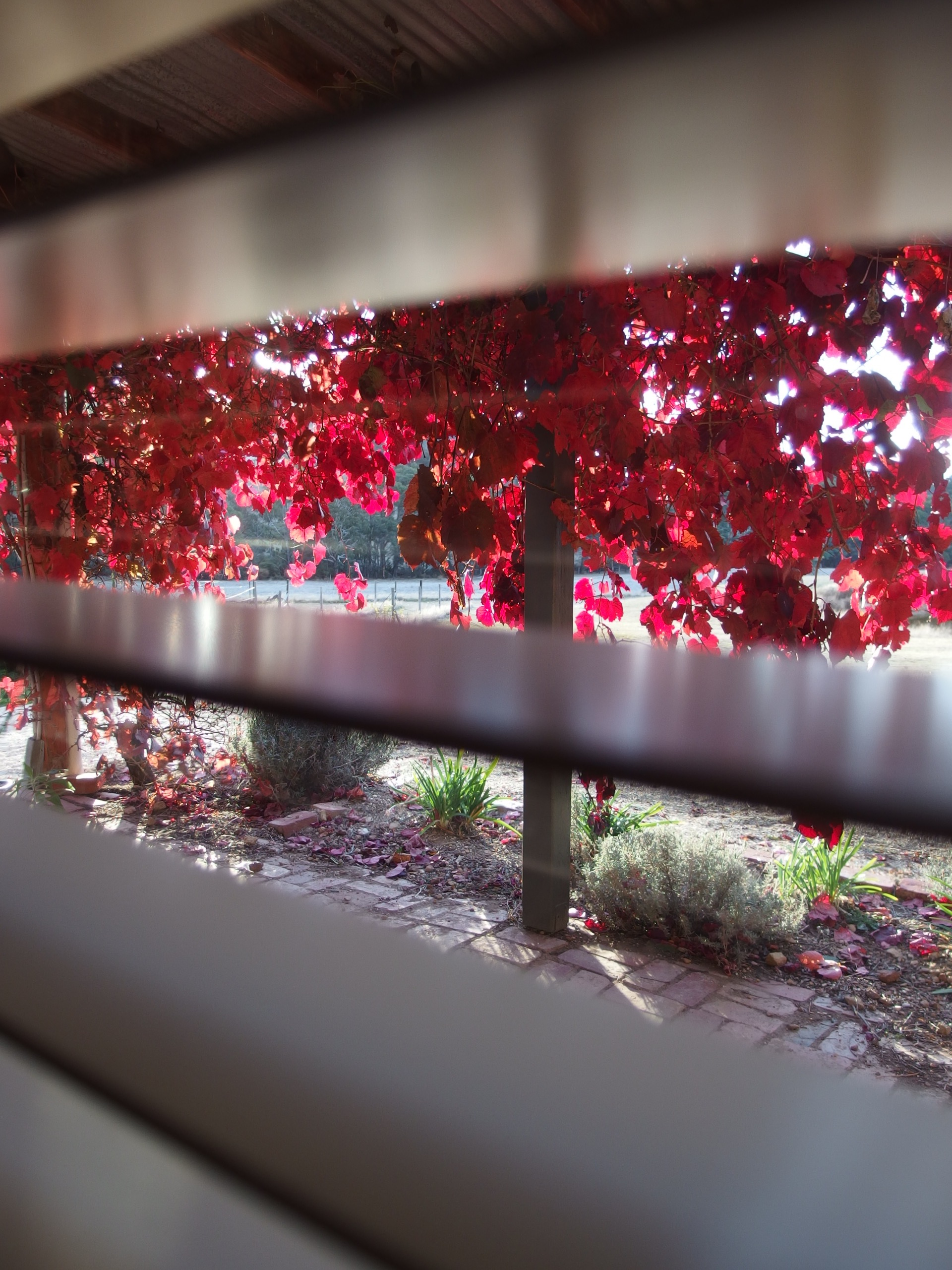 autumn through window.jpg