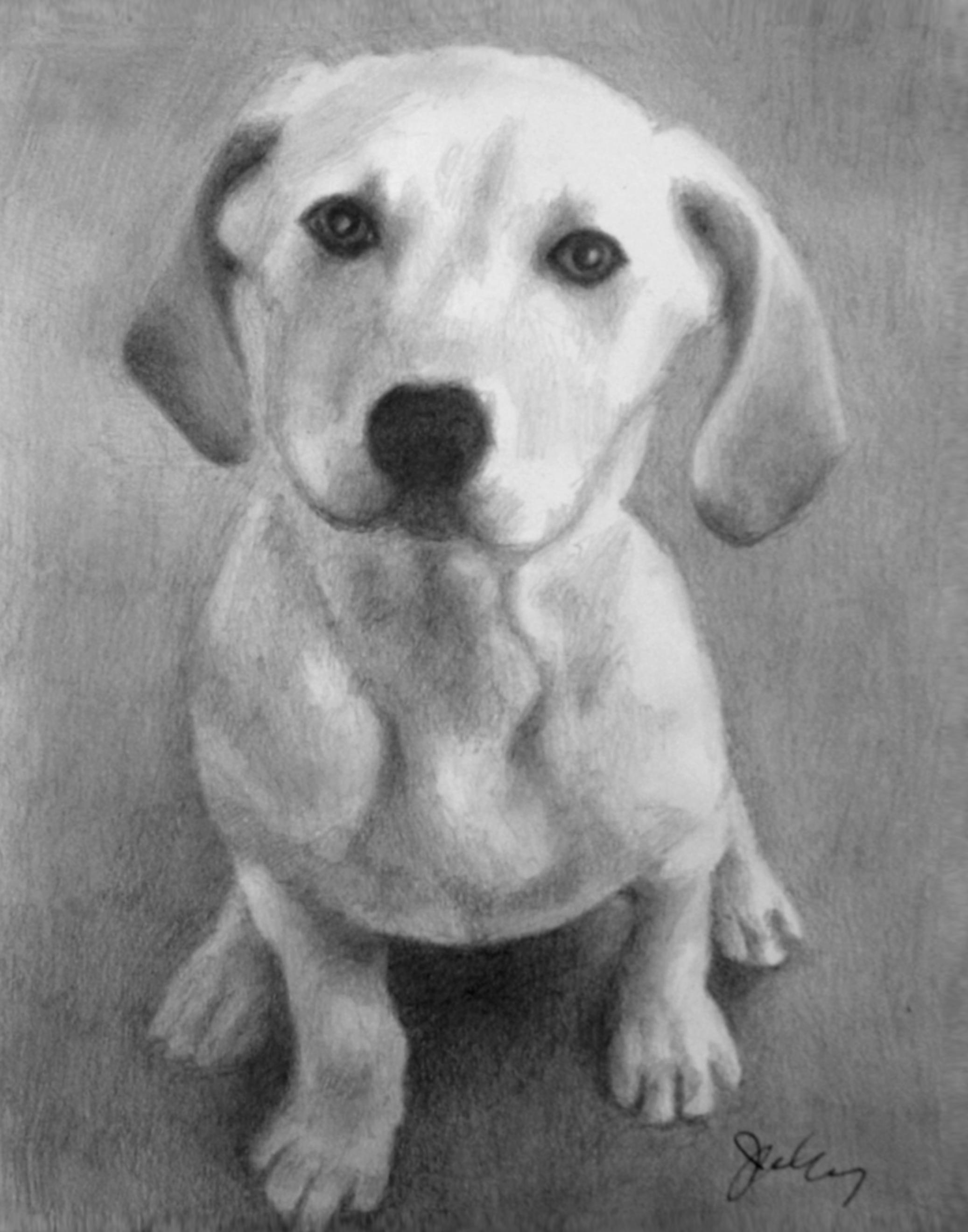 Angie's Dog.jpg