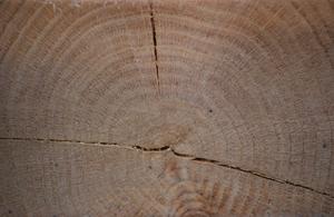 detail for oak 11 300.jpg