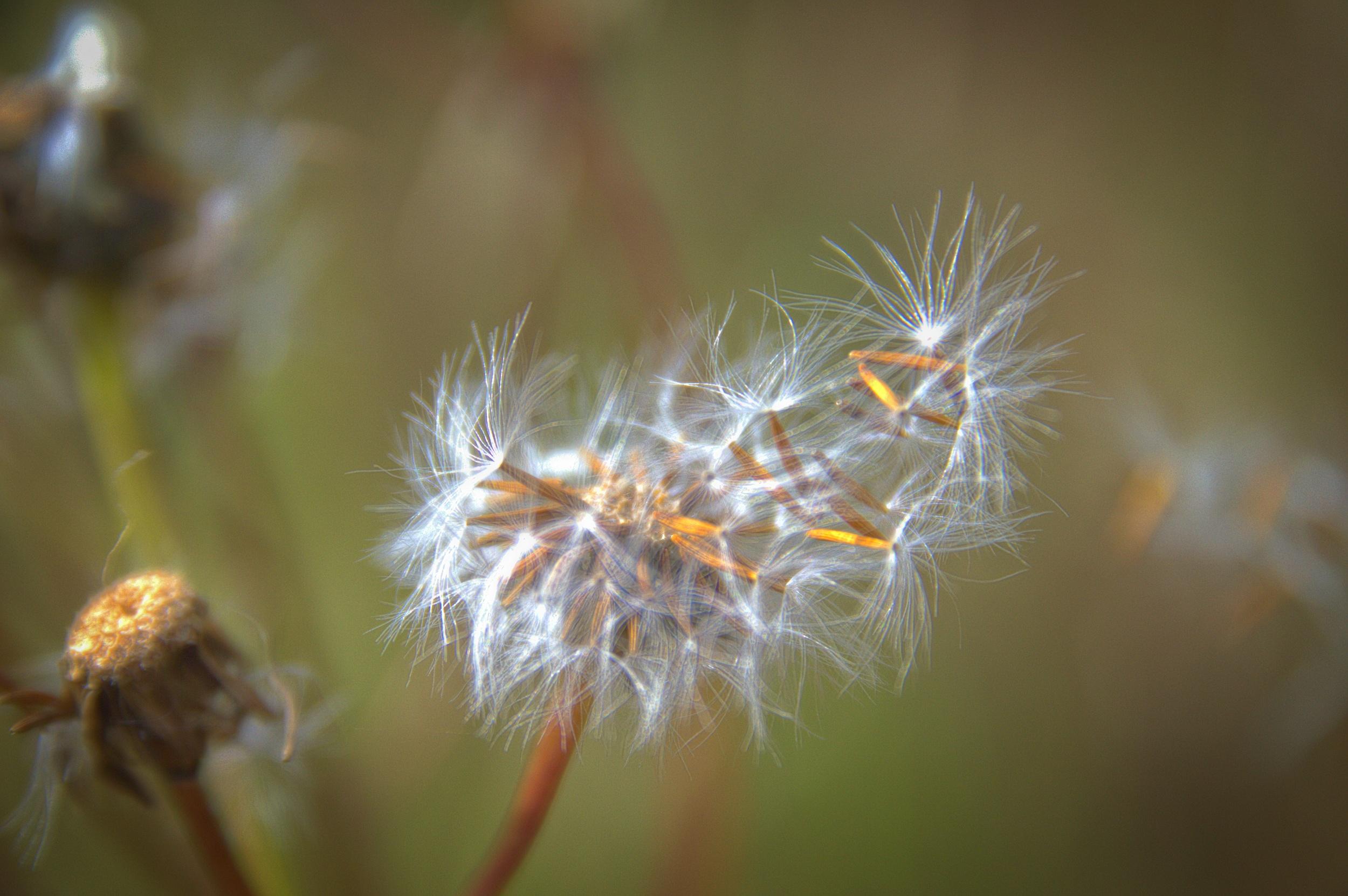 Seeding In the Blow.jpg