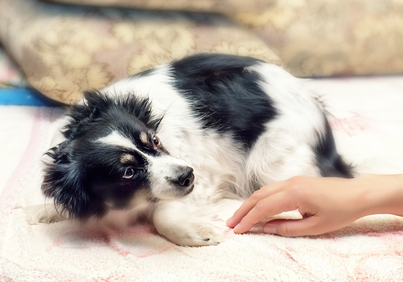 Fearful_puppy.jpg