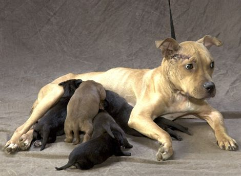 Dog_Mom_and_puppies.jpg