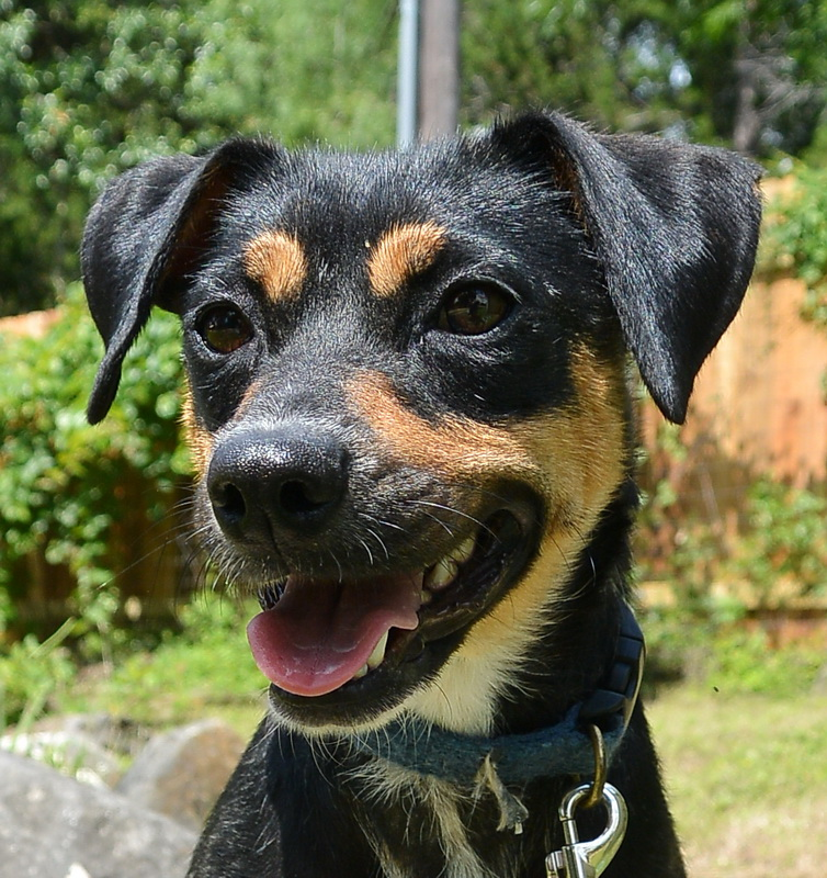 Smiling_dog_from_shelter