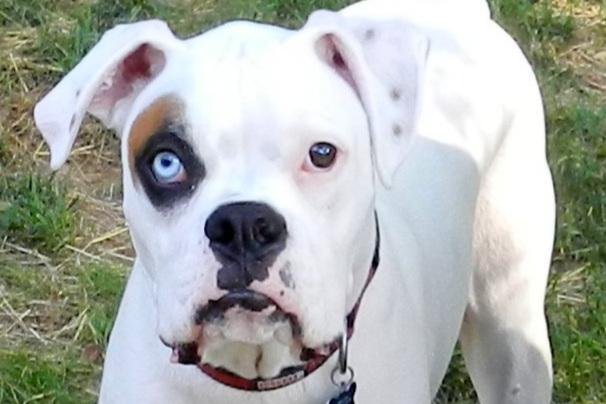 deafdog.jpg