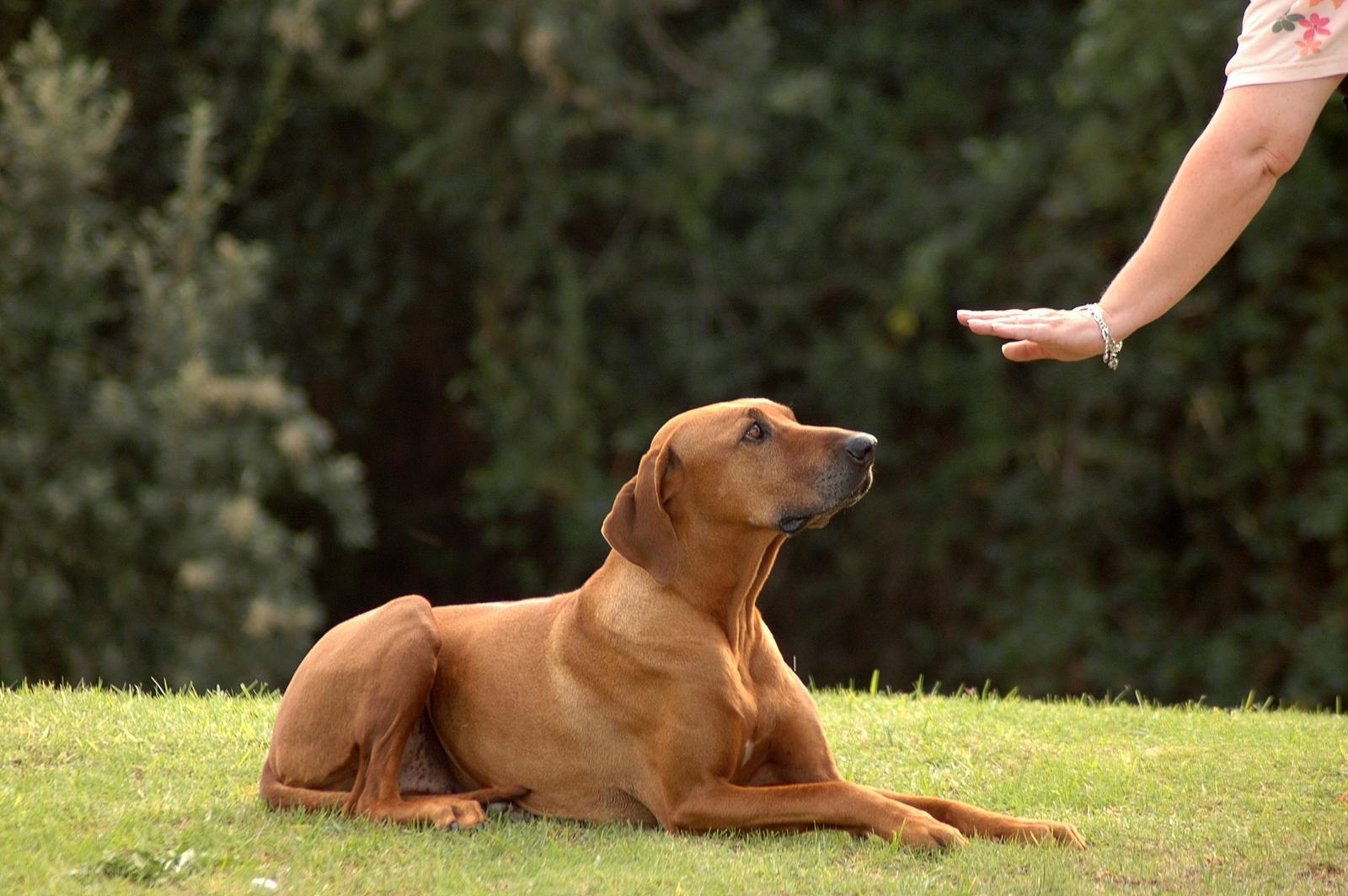 PET OBEDIENCE AND MANNERS