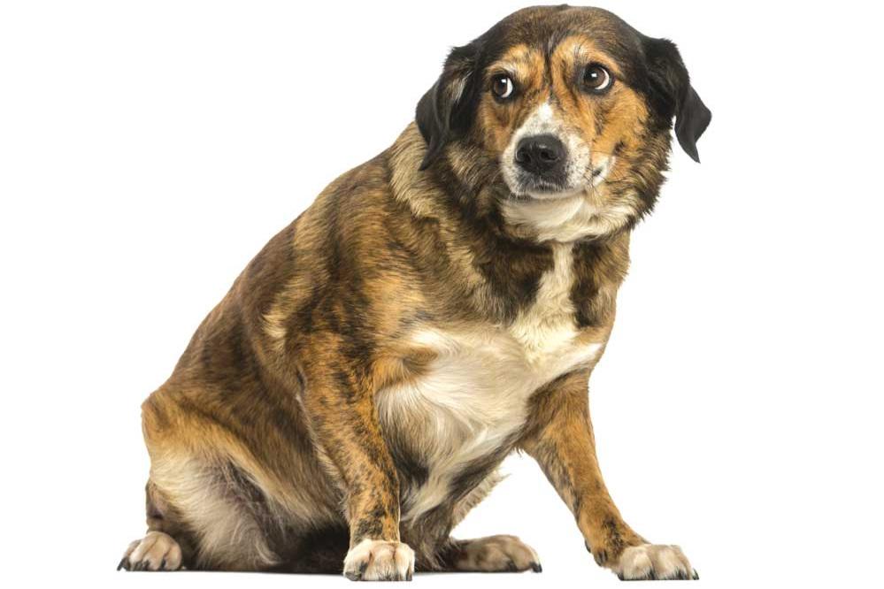 stressed+dog.jpg