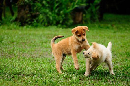puppy social.jpg