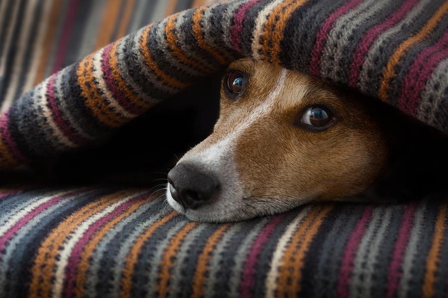 bigstock-Dog-Ill-Or-Sleeping-111395093.jpg